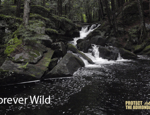 "Members: Sign up for ""Online Action Briefings"" about our work to protect the wild Adirondacks and sign up for a paperless membership!"