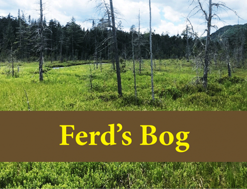 Ferd's Bog is an easy hike to a boardwalk that extends deep into complex and lovely wetland and bog