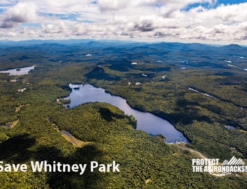 The Case for Why Whitney Park Should be Forest Preserve