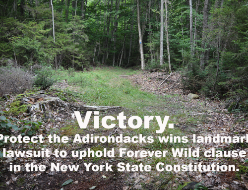 Victory: New York's Highest Court Rules in Favor of Protect the Adirondacks, Finds Cuomo Administration Violated Forever Wild Clause of State Constitution