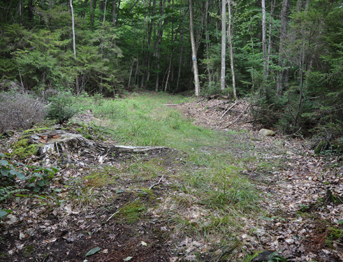 Class II Trail Construction Caused Enormous Damage to the Forest Preserve